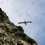 Vogelinsel Runde , Quelle: norwegen-insider.de
