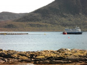Lachsfarmen: Anlage im Lifjord (Vesterålen)
