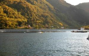 Lachsfarmen: Anlage im Skjellfjord  (Vesterålen)