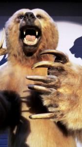 Eindrucksvoll: Bär im Waldmuseum