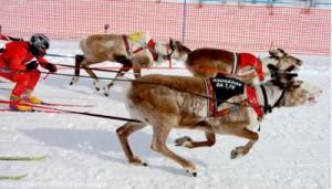 Reindeer Racing Wolrd Cup