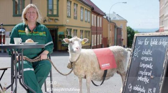 Heidi, das Schaf, mit ihrer Besitzerin in einem Café in Oslo. Foto: Visit Norway